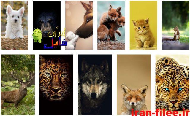 دانلود والپیپر حیوانات برای کامپیوتر و موبایل با کیفیت ۴K